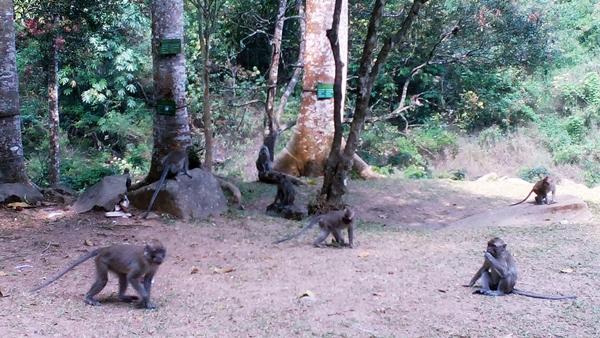 Monyet penghuni Maribaya